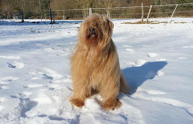 Bya-ra - Die Wintersonne genießen