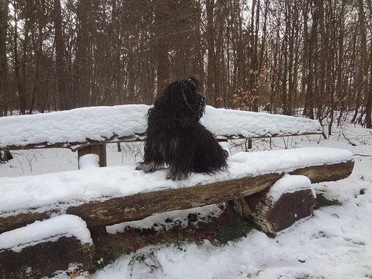 Yeshi unterwegs im Winterwald - Januar 2016