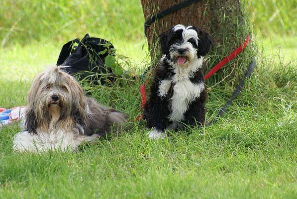 Coole Milka mit dem Hundekind Lisha