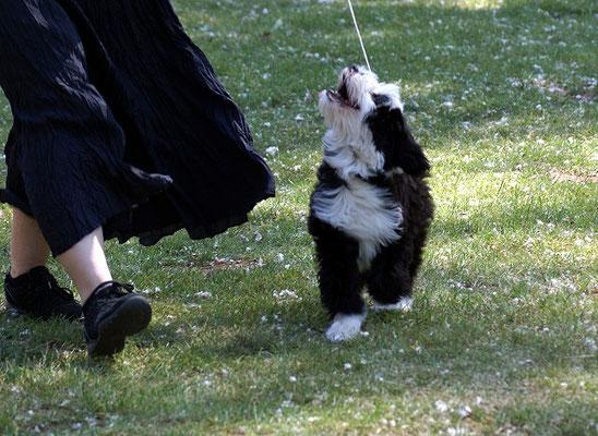 Lishas erste Ausstellung - Groß-Gerau - Puppy Klasse - Juni 2015