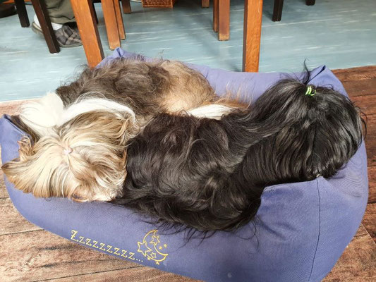 Milka und Sohnemann Yeshi