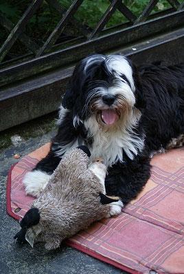 Lisha hat ein Wildschwein erlegt