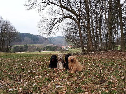 Die kleine Tibi-Meute im Odenwald