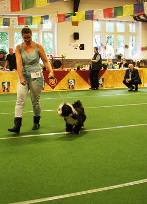 Klubschau Werl 2015 - Anja mit Lisha im Ring