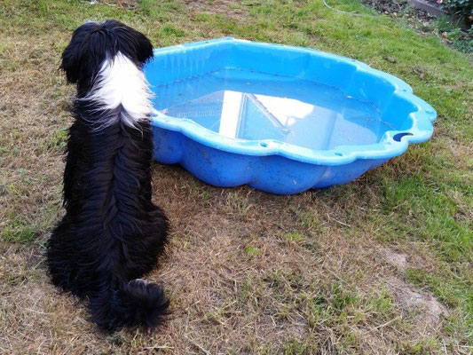 Klein-Lisha freut sich über einen Badefreund!