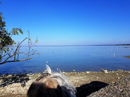 Wasservögel in Massen, spannend!