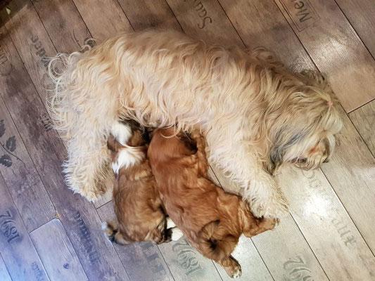 Kleine Familie - 9 Wochen