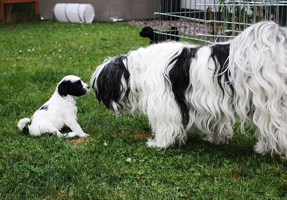 An-Dha-Na-I-Wurf - 5 Wochen alt - Ishu, Mamas Spiegelbild