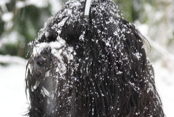 Yeshi - So sieht man aus wenn man im Schnee abtaucht wie sonst im Bach, Egal, alles Wasser!