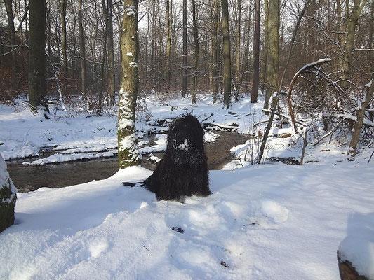 Yeshi im verschneiten Wald