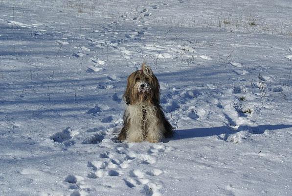 Milka im Schnee - Januar 2016