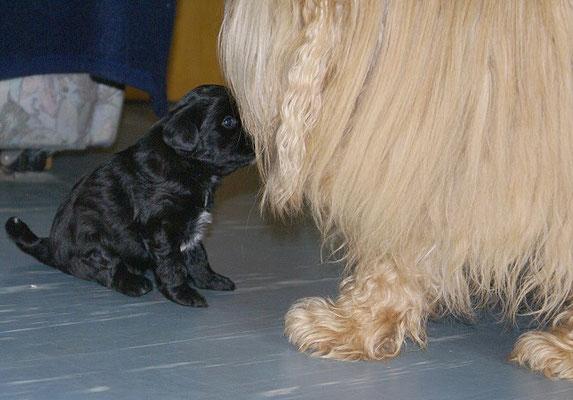 G-Wurf - Ur-Oma Bya-ra und Klein-Gala - 4 1/2 Wochen alt