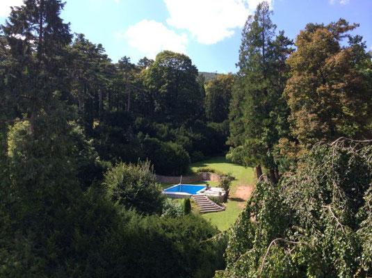 花园、游泳池