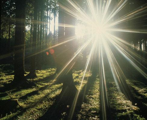 Amancer en el bosque