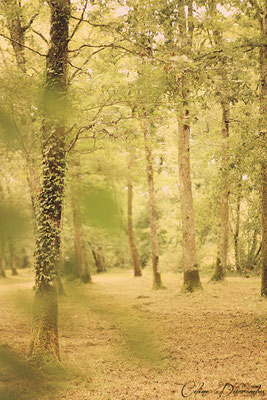 Forest - Gironde