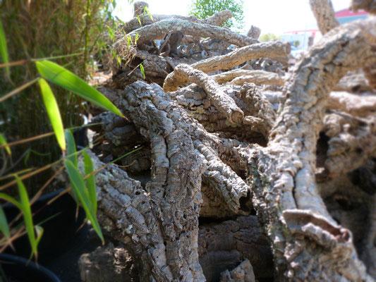 Korkeiche Dekoration im Garten - Terra Domo Filderstadt