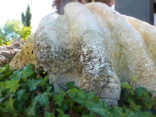 Versteinerte Muschel Dekoration im Garten - Terra Domo Filderstadt