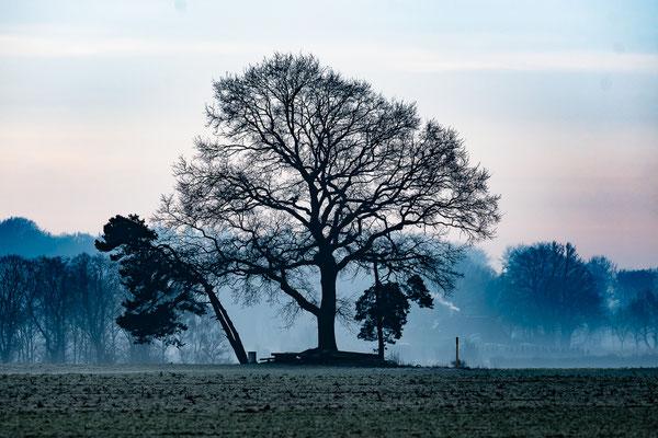 kalte Bäume
