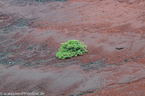 Lanzarote seltenes Grün