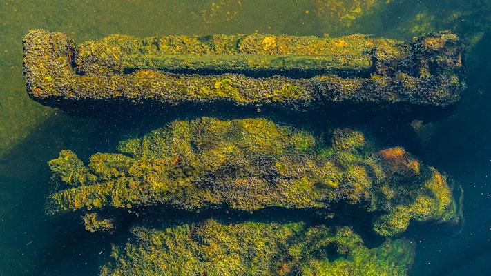 Fischeier am Düker - Zierker See