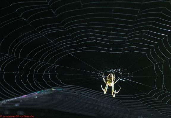 Zentrum der Macht - Spinne auf der Lauer