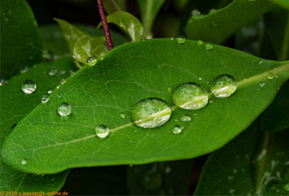 Tropfen nach Regenschauer