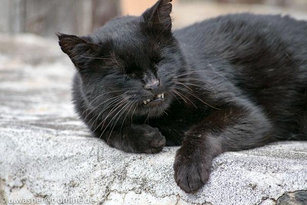 Katze La Gomera