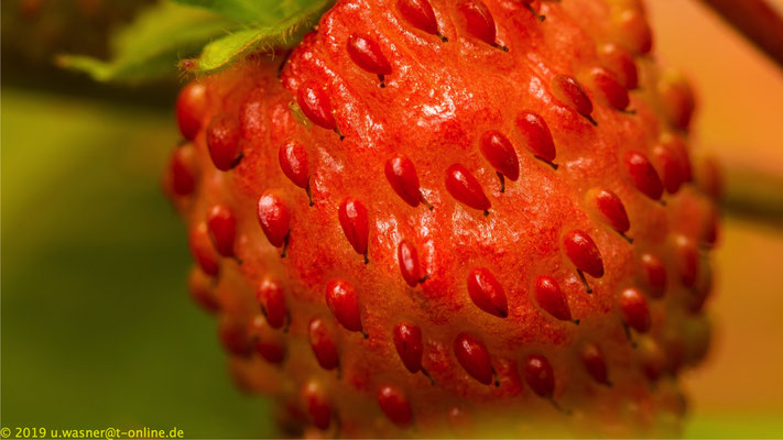 Macro-Aufnahme einer Erdbeere