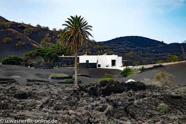 Lanzarote Haus mit Palme