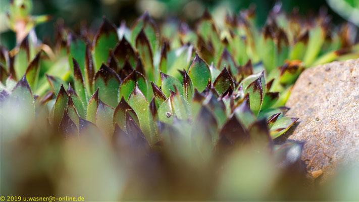 Pflanzen im Steinbeet