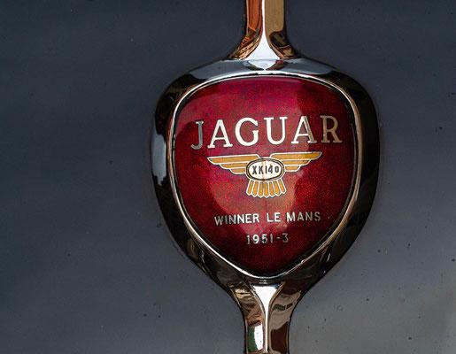 Jaguar - gesehen in Heidelberg Juli 2020