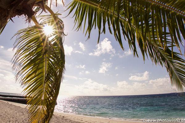 Strandblick mit Palme und Meer