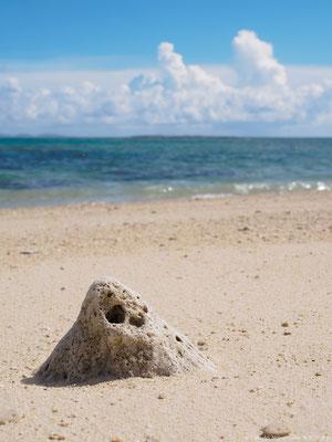 入江ビーチの珊瑚