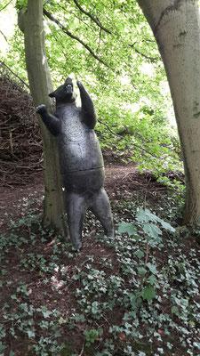 Bär im Wald