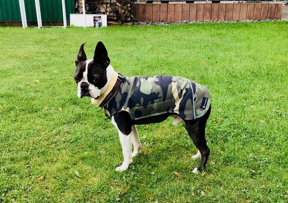 Wintermantel Hund Maßanfertigung, Hundemantel wasserfest nach Maß, Hundemantel Softshell