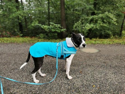 Hundemantel Softshell maßgefertigt