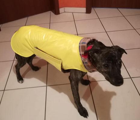 Hundemantel Maßanfertigung, Regenmantel Hund, Hundemantel maßgeschneidert