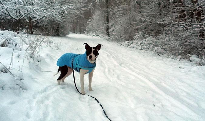Hundemantel Maßanfertigung - Hundewintermantel