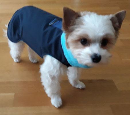 Maßanfertigung Hundemantel, Nano-Softshell
