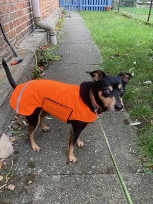 Hundemantel Maßanfertigung, Softshellmantel Hund nach Maß