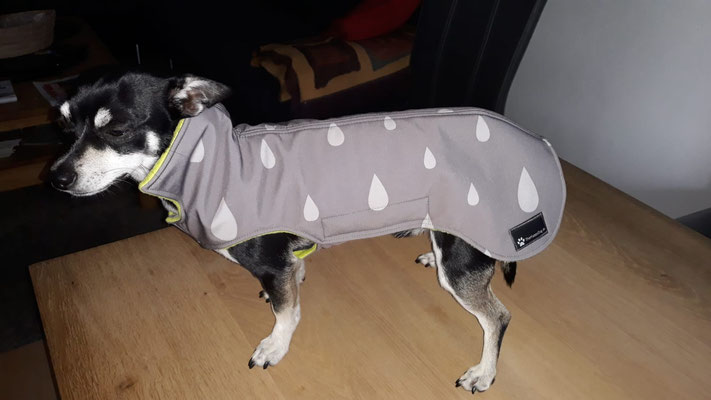 Hundemantel Softshell MaßanfertigungHun