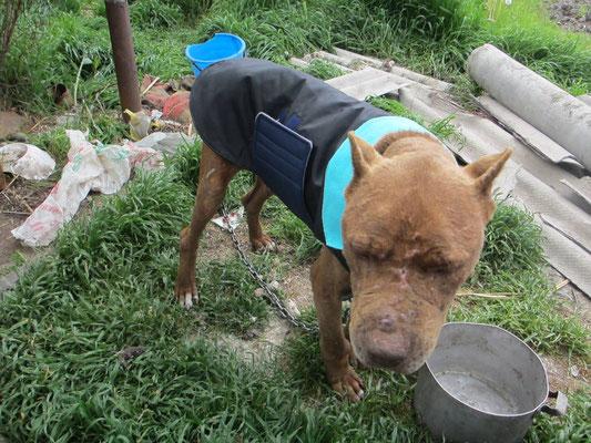 Ein Hundemantel für eine ganz arme Seele :(  / Hundemantel Tierschutz