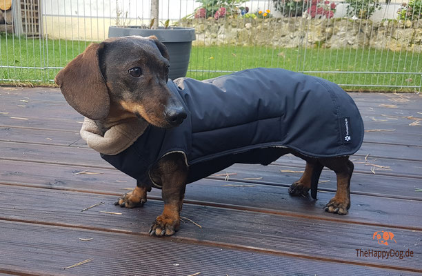 Hundemantel für Dackel, maßgefertigt