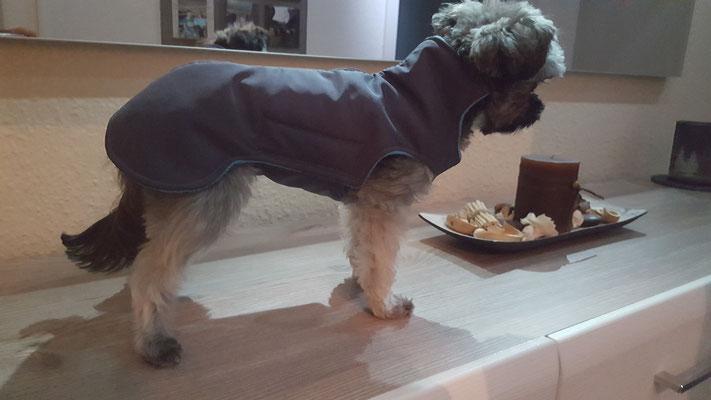 Hundemantel Maßanfertigung, Wintermantel Hund, Hundemantel für sehr kleine Hunde, Hundemantel für großes Geschirr