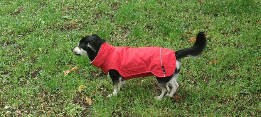 Regenmantel Hund Maßanfertigung