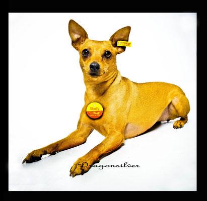 Fotoshooting Haustiere mit anschließender Bild-Bearbeitung , Leinwanddruck