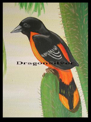 Caribic Bird