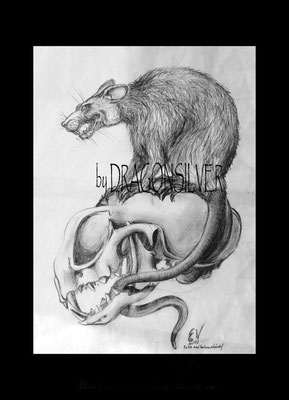 Tattoovorlage Skull and Rat , Bleistift