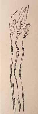 """Carole TEXIER """"Sígnica 9"""" Burin sur papier japon - 38 x 13 cm"""