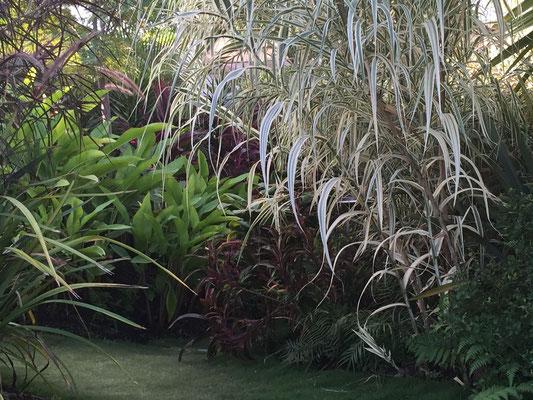 Entrée de jardin I Folies tropicales © Rc-Paysage